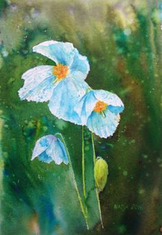 Himalayan poppy. Watercolor/Brusho painting. 28x38cm.