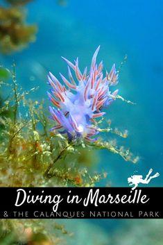 Parc National, National Parks, Marseille France, Destinations, Snorkelling, Parcs, Future Travel, Underwater Photography, Ocean Life