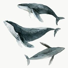 Humpback whale watercolor painting transparent png premium image by rawpixel com / Niwat in 2020 Watercolor whale Whale drawing Humpback whale