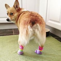 27 Dogs Wearing Socks Who Will Make Your Day