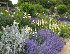 Plant combo @ Mottisfont Abbey, UK.  Nepeta, stachys byzantia, salvia, pale yellow sisyrinchium stratium, achemilla mollis instyleblog.co.uk