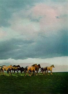 Herd of Nez Pierce horses National Geographic | March 1977