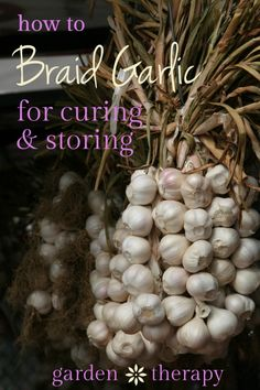 How to Braid Garlic for Stylish Winter Storage Learn how to braid garlic for both decorative and storage purposes. Step-by-step photos will help to show the tricky steps so that it will look gorgeous. Braiding Garlic, Organic Gardening, Gardening Tips, Vegetable Gardening, Urban Gardening, Organic Farming, Conservation, Fruits And Veggies, Vegetables