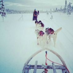 Find a dog and sled team. That is a fun ride!