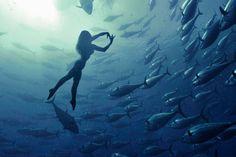 'Mermaid' swims with tuna | New York Post Retired Japanese Olympic synchronized swimmer Saho Harada dances inside a shoal of tuna two miles off the coast of Malta. The underwater shots were taken by Maltese photographer Kurt Arrigo.