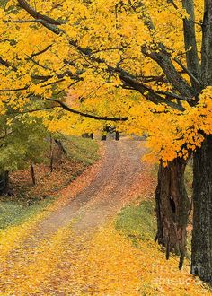 Autumn Country Road Print by Alan L Graham