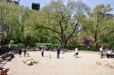 nyc dog runs - Google Search Manhattan Neighborhoods, New York Minute, Upper East Side, Dog Runs, Big Dogs, Design Elements, New York City, The Neighbourhood, Dolores Park