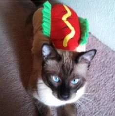 Who said you have to be a dog to be a hot dog? This kitty cat, for instance, is still the bees knees in its tasty-looking get-up. Find a similar costume here.