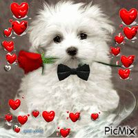 Konstantin a Maltese for you,hope you enjoy this cuttie and he is wishing you a Happy Valentine's Day ! Cute Puppies, Cute Dogs, Dogs And Puppies, My Little Nieces, Puppy Images, Rose Images, Kitten Love, Beautiful Rose Flowers, Cartoon Gifs