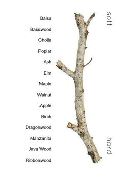 Wood Density Guide for Bird Toys