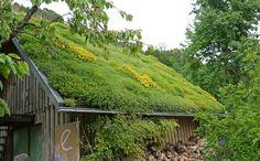 Spezialist für Bambus, Gräser und viele weitere Garten Pflanzen. Dachpflanzen und Dachbegrünung für grüne Dächer, Garagen und Steingärten
