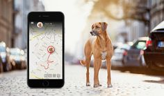 This GPS will always let you know where your pet is.      >>>>> Buy it here   http://amzn.to/2d7tesQ
