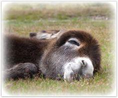 Sleepy Girl. Courtesy: Astrida (Bigbird3), (UK).