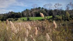 I luoghi indimenticabili a volte sono quelli che hai dimenticato di cercare davvero. E spesso sono più vicini della fantasia... #livorno #vallebenedetta #toscana #tuscany #tuscanypeople #volgolivorno #volgotoscana #volgoitalia #igers #igerslivorno #igerstoscana #igersitalia #natura #nature #campagna #landscape #paesaggio #fotografia #photography #instalike #instalife #l4l #like4like #likeforlike