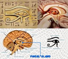 La glándula pineal es el ojo de horus, el del triángulo
