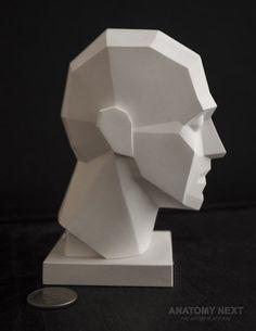Анатомия Следующий магазин - MALE ПЛОСКОСТНОЙ ГОЛОВА 3D модель PRINT