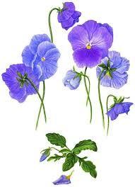violets - Cerca con Google