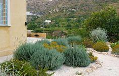 Aromas-jardin-mediterraneo.jpg (1400×900)
