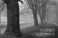 Foggy Day by Randi Grace Nilsberg