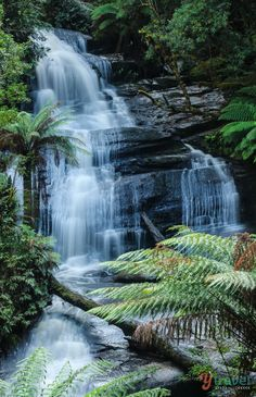 Triplet Falls in Otways National Park along the Great Ocean Road - visit here on this 3 week Australia itinerary!