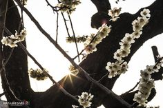 Flowers and sun by Dario Hayashi on 500px