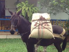 Cafe de Colombian  Twitter / Recent images by @Cindy Doxsey Best Coffee, Coffee Time, Colombian Coffee, Fauna, Horses, Donkeys, Latin America, Cakes, Logo