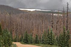Fossil fuel global warming threatens our forests! See http://www.truth-out.org/news/item/34853-the-beetles-eighty-nine-million-acres-of-abrupt-climate-chang