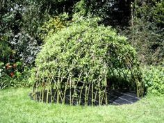Build a Living Tee Pee! You can use any number of materials to create a living tee pee and your children will adore playing in them. From bean poles to twigs, there are several things that can make up the base and then you just have to choose what you want for the cover.
