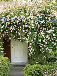 Garden Flowers - Annuals Or Perennials Portes Fleuries Garden Gates, Balcony Garden, English Garden Design, Climbing Roses, Diy Pergola, Pergola Ideas, Garden Inspiration, Garden Ideas, Flower Decorations