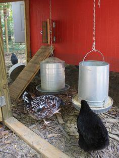 Chicken Coop Designs for Backyard Chickens : HGTV Gardens
