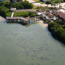 Manatee Viewing Center - Tampa Electric
