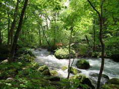Oirase Stream, Aomori, Japan. 奥入瀬渓流、青森