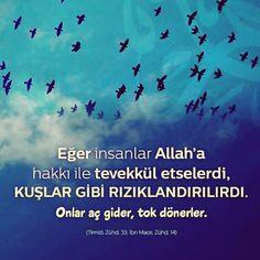 ✏ Eğer insanlar Allah'a hakkı ile tevekkül etselerdi, kuşlar gibi rızıklandırılırdı. Onlar aç gider, tok dönerler. #insanlar #kuşlar #rızık #tevekkül #aç #tok #hadis #islam #müslüman #türkiye #istanbul #rize #trabzon #üsküdar #eyüpsultan #ilmisuffa