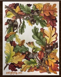 Beautiful Autumn 🍂 Oak leaves and Acorns coloured by from The Flower year ♥️ Coloring Book Art, Coloring Pages, Flower Art Drawing, Johanna Basford Coloring Book, Colored Pencil Techniques, Oak Leaves, Polychromos, Colouring Techniques, Color Pencil Art