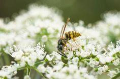 Dit kun je doen om de insecten in jouw (school)tuin een handje te helpen Om, Plants, Plant, Planets
