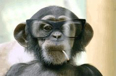 monkey wearing sunglasses just deal with it | DOPE-SMOKING, MENSTRUATING MONKEY STUDY GOT $3.6 MILLION IN AMERICAN ...