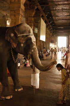 Elephant blessing - Sri Meenakshi Temple, Madurai, Tamil Nadu, India