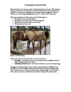 The breeding cycle of the mare is explained with signs of her being in season and out of season detailed.  Key breeding terminology is also explored.Pages 1 and 2: photos of a mare teasing; key breeding terminology and the mare's cycle explainedPage 3: breeding questions for students; multiple choice and short answerPage 4: teacher's notes with answersCreated by Christine Meunier