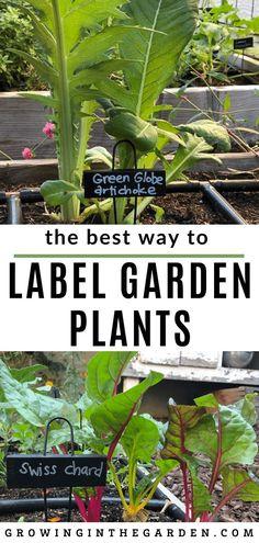 Little Garden Design The Best Way to Label Garden Plants Big Plants, Garden Plants, Vegetable Garden, Indoor Garden, Growing Microgreens, Growing Vegetables, Amazing Gardens, Beautiful Gardens, Organic Gardening Tips