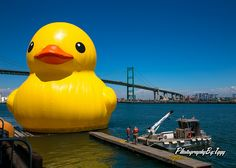 Rubber Duckie in The West Coast