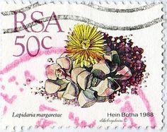 Republic of South Africa.  SUCCULENTS.  LAPIDARIA MARGARETAE.  Scott 749 A259, Issued 1988 Sept 1, Litho., Perf. 14 x 14 1/2, 50. /ldb.