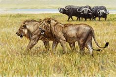 """Way Too Much Bull"" by John Banovich, 12x18 Oil on Belgian Linen"
