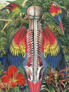 Anatomical Drawings In Technicolor Juan Gatti