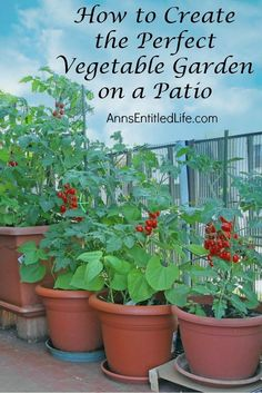 Create the Perfect Vegetable Garden on a Patio How to create the Perfect Vegetable garden on a patio.How to create the Perfect Vegetable garden on a patio. Indoor Vegetable Gardening, Veg Garden, Small Space Gardening, Gardening Tips, Organic Gardening, Balcony Gardening, Apartment Vegetable Garden, Small Vegetable Gardens, Apartment Gardening