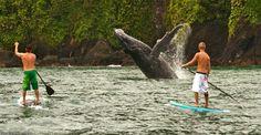 avistamiento de ballenas en buenaventura Cali, Sumo, Wrestling, Places, Sports, Future, Amazing, Whale Watching, Buenaventura