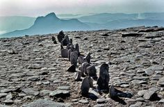 A LINE IN SCOTLAND  CUL MOR 1981 Richard Long