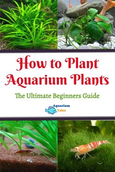 Biotope Aquarium, Aquarium Garden, Aquarium Landscape, Live Aquarium Plants, Planted Aquarium, Aquarium Ideas, Tropical Fish Store, Tropical Fish Aquarium, Tropical Fish Tanks