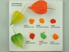 Pigments for natural colors - plants, animals, stones ...
