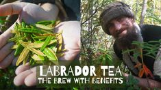 Labrador Tea - The Brew with Benefits - YouTube Herbs For Health, Tea Benefits, Cult Following, Homeopathy, Natural Healing, Natural Remedies, Brewing, Labrador, Herbalism