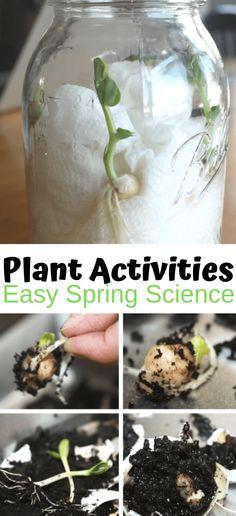 Plant Activities For Preschool - Little Bins for Little Hands